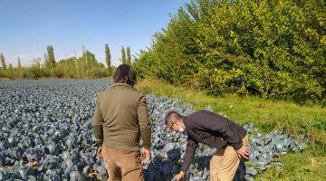 Esenlik'ten Tarladan sofralara doğal ve ucuz sebze